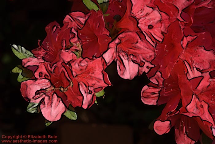 """Azaleas on the Edge"""